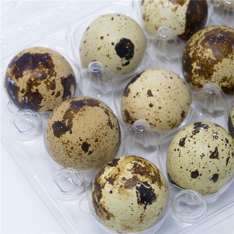 50Pcs 18 Grids Quail Egg Storage Box Egg Case Organizer Holder Box Container NEW