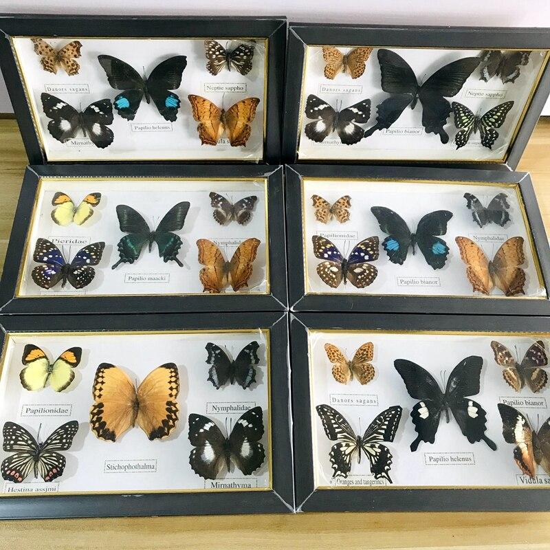 Реалистичный образец красивой бабочки, коллекция обучающих материалов/образец бабочки, художественный материал для декора