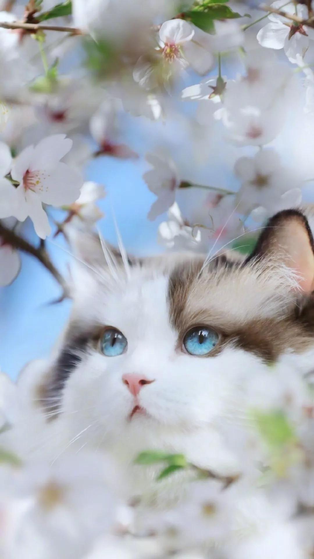 猫片壁纸 :生活不断拍打我们的脸皮,最后不是脸皮厚了,是肿了!插图71