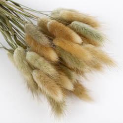 Натуральный кролик хвост трава букет из сушеных цветов собачий хвост трава, растения действительно Цветочный блок цветочный с деревом