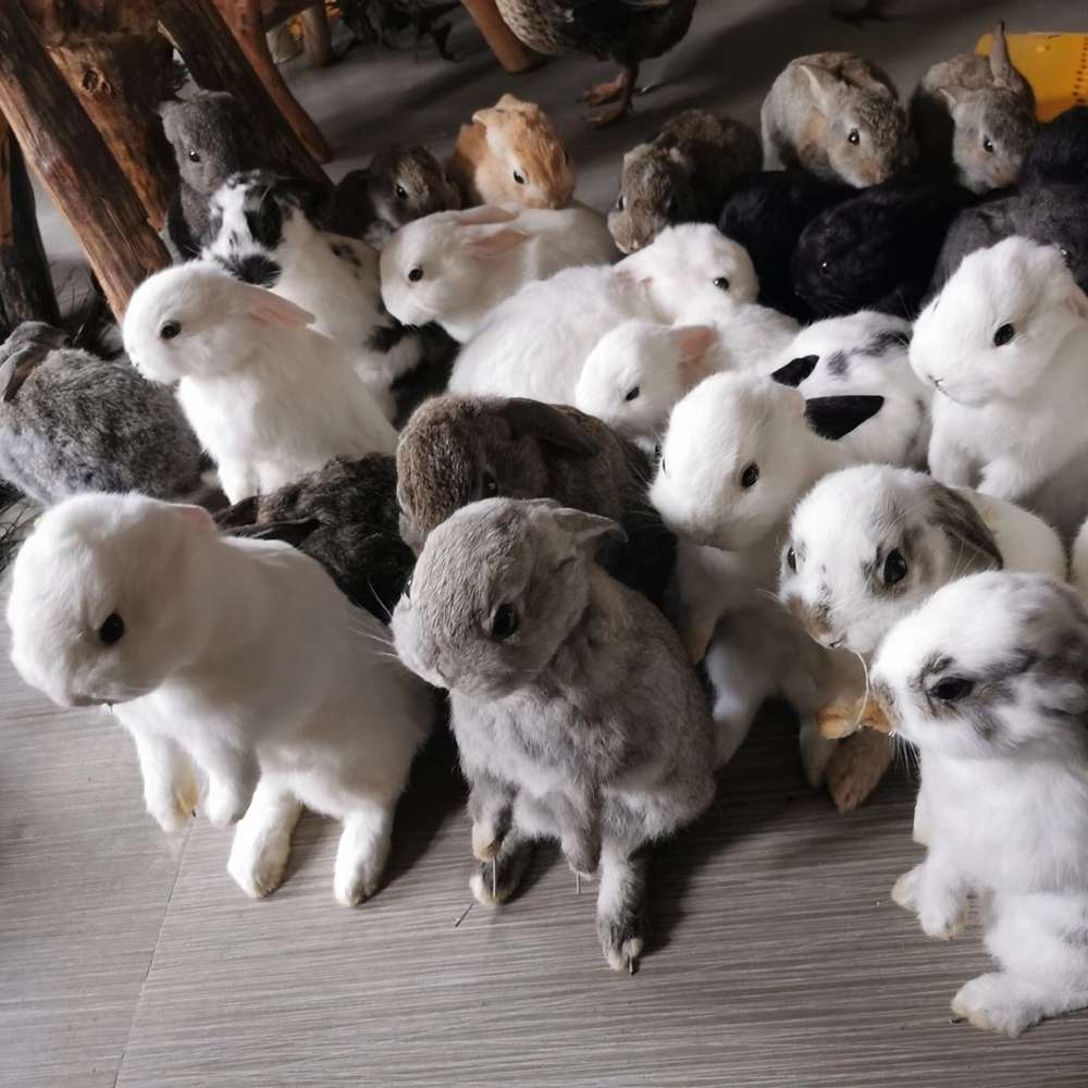 Taxidermy Stuffing Rabbit Teaching Specimen Collection Bunny Fur Home Decor 1pcs random Malaysia