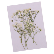 10Pc Beautiful Pressed Babys Breath Dried Flowers For Art Craft Scrapbooking