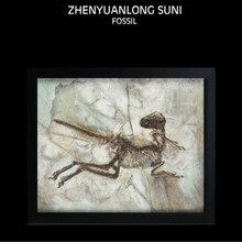 Vitae Zhenyuanlong Suni Fossil Photo Frame Dinosaur Toys Animal Collector Decoration Adults Gift