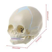 1: 1มนุษย์ทารกในครรภ์ทารกทารกทางการแพทย์Skull Anatomicalโครงกระดูกอุปกรณ์การสอนสำหรับวิทยาศาสตร์การแพทย์