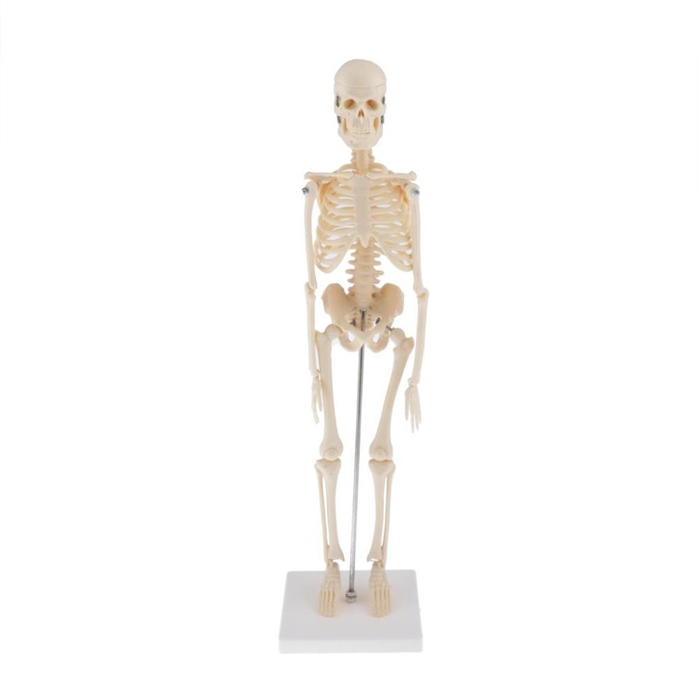 45CM Flexible  Human Anatomical Anatomy Skeleton Decoration Model  Anatomical Skeleton Toys Human Skelet  Model Teaching Tools