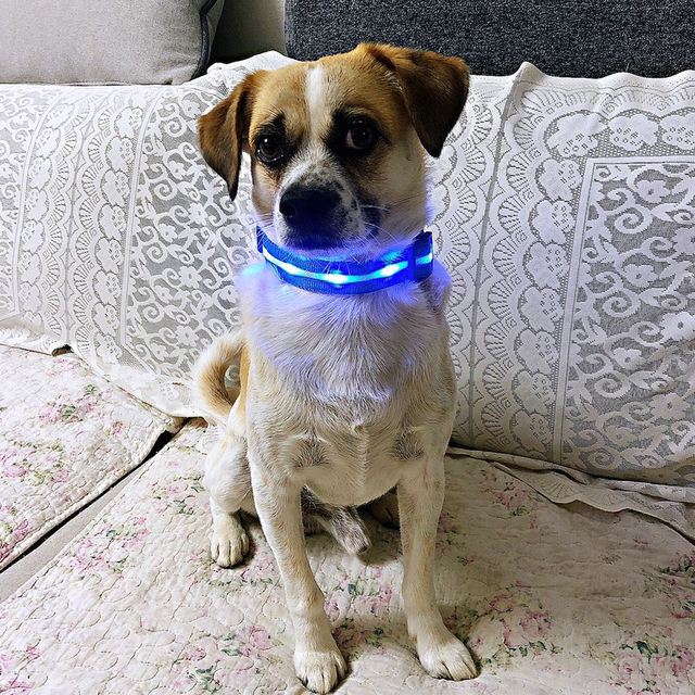 LED Glowing Pet Collar - USB Rechargeable 5 COLORS Puppy Glow  4