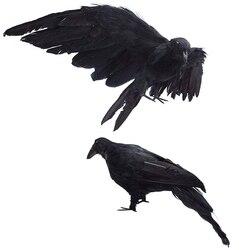 Neue-2-Pack Realistische Crows Extra Große Handgemachte Schwarz Gefiederten Crow für Halloween Dekorationen Vögel, L (13 Zoll + 12 Zoll)