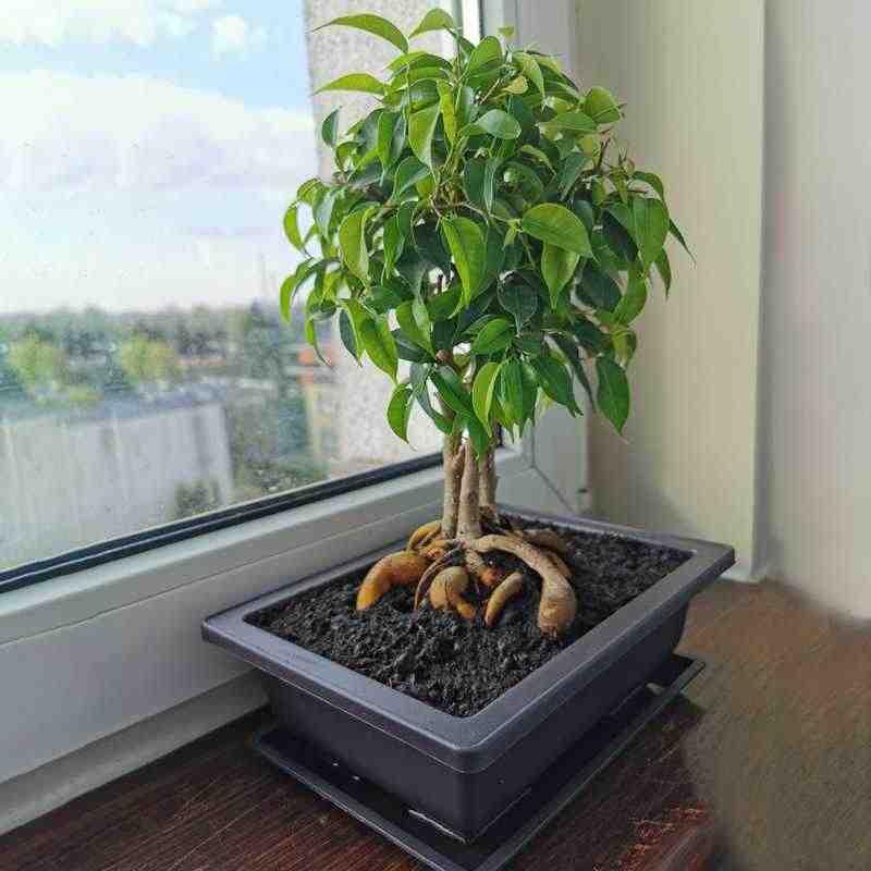 10 Packs Bonsai Training Pots With Tray Plastic Bonsai Plants Gg Pot For Garden Yard Living Room Balcony 16 5x12cm Flower Pots Planters Aliexpress