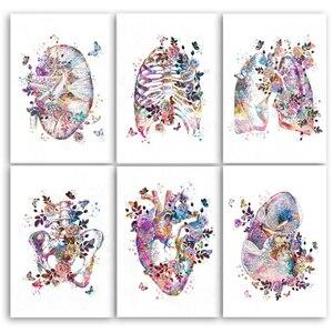 5d diy cérebro coração pulmão anatomia diamante bordado órgão anatômico anatomia humana pintura diamante mosaico médicos presente decoração