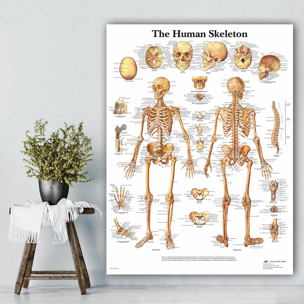 ANATOMICAL SKELETON SKELETAL SYSTEM HUMAN BODY MEDICAL WALL ART POSTER