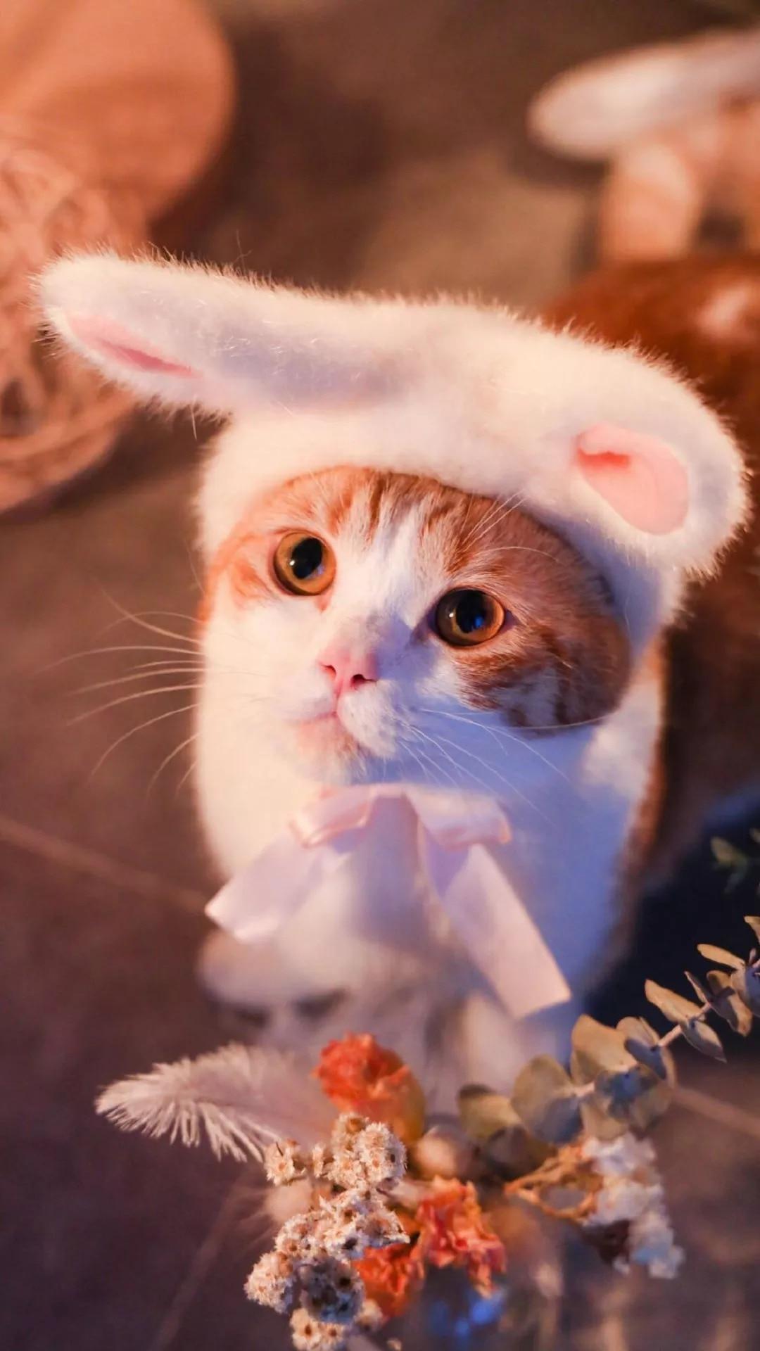 猫片壁纸 :生活不断拍打我们的脸皮,最后不是脸皮厚了,是肿了!插图61