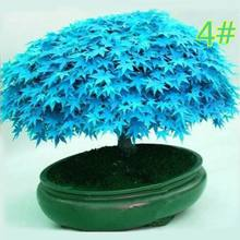 20 pçs japonês maple semente bonsai diy planta vaso de flores folhas coloridas casa criativa mini jardinagem decoração l5ye