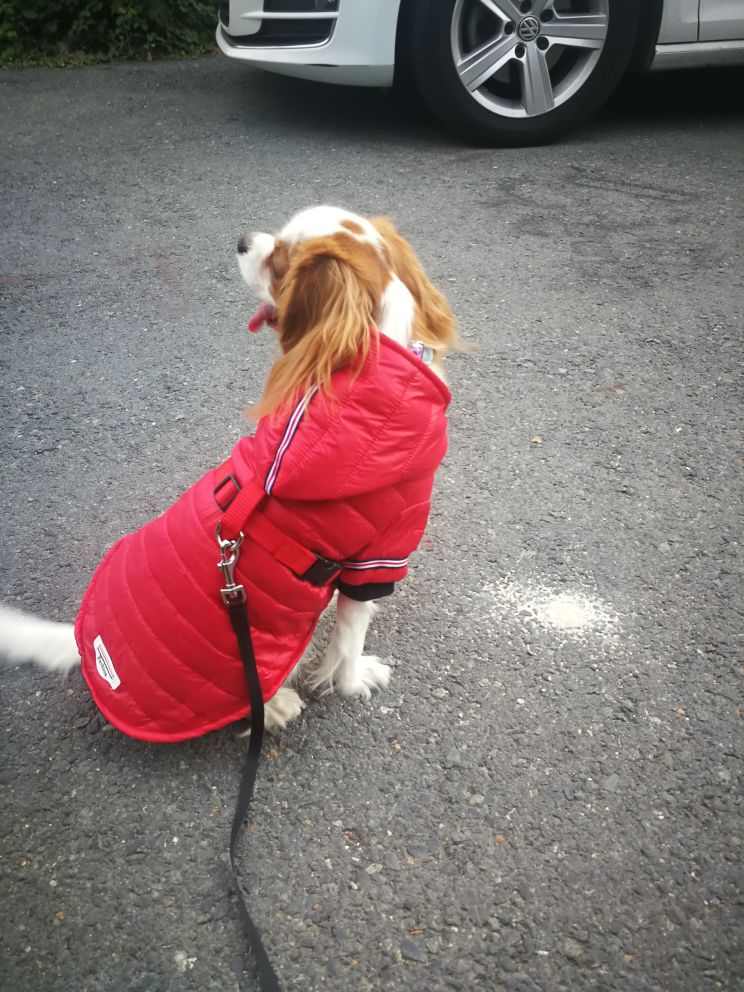 Waterproof Dog Jacket with Hoodie Ideal for Small and Medium Dogs as Dog Clothing 4