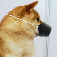 מסכה לכלב להגנה נגד וירוס הקורונה