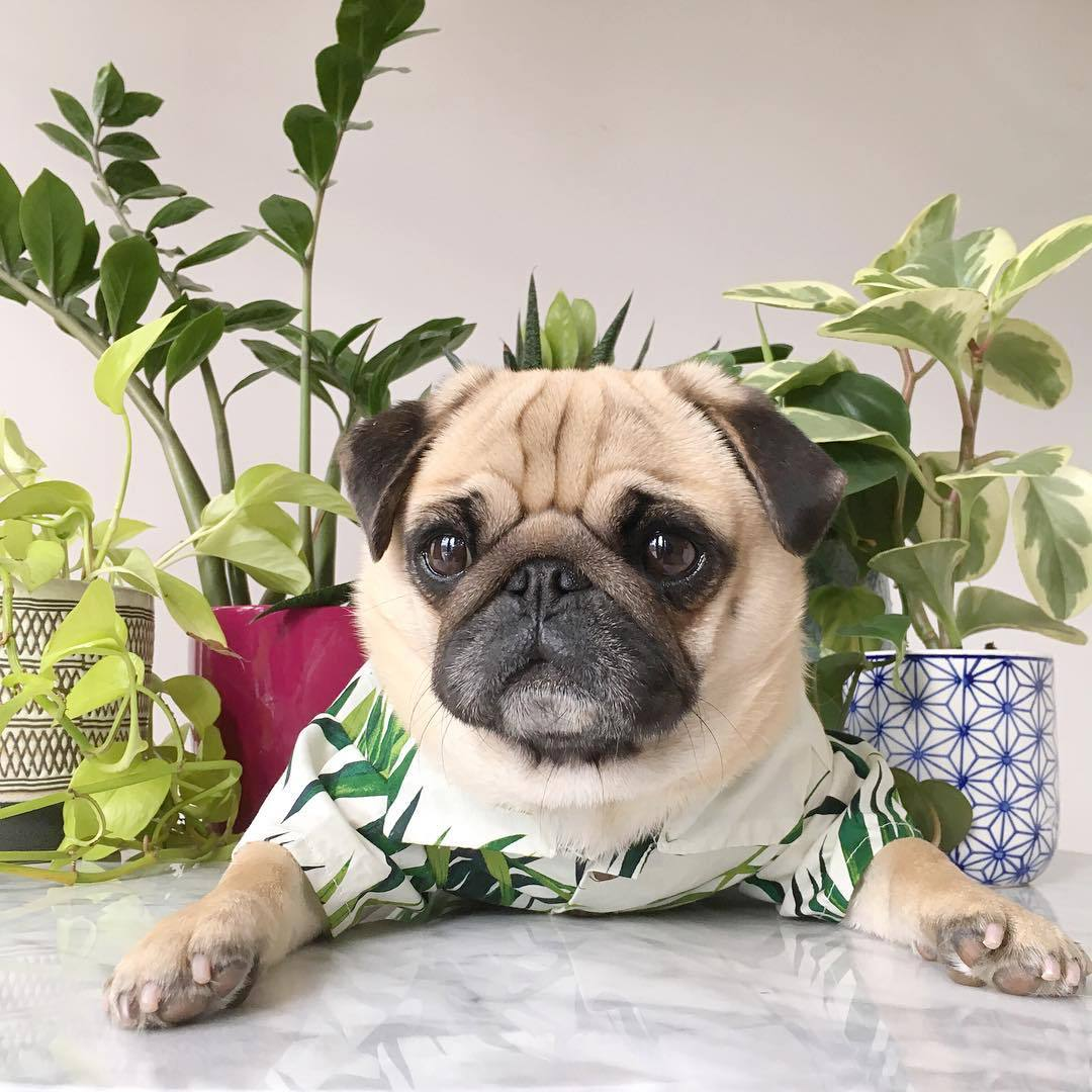dog summer clothes