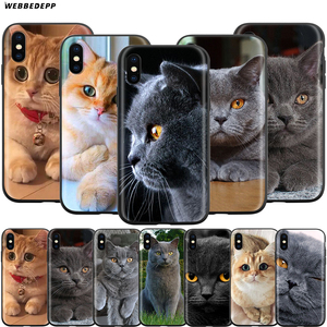 Webbedepp British Shorthair cat Case for Apple iPhone 11 Pro XS Max XR X 8 7 6 6S Plus 5 5S SE(China)