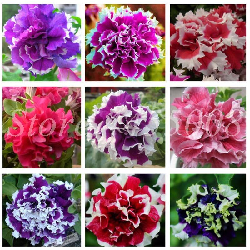 300 pcs/ bag Bonsai Hanging Petals Petunia Flower Mixed Color Morning Glory Potted Perennial Flore Planta DIY Home Garden Plants