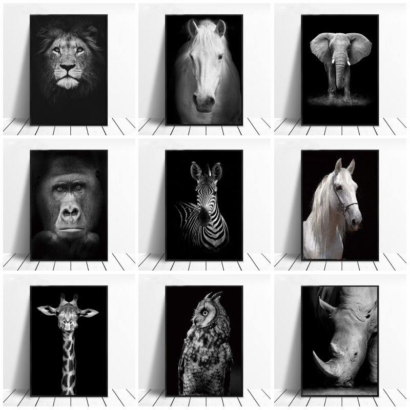 wall art pictures wild animals photography poster monkey