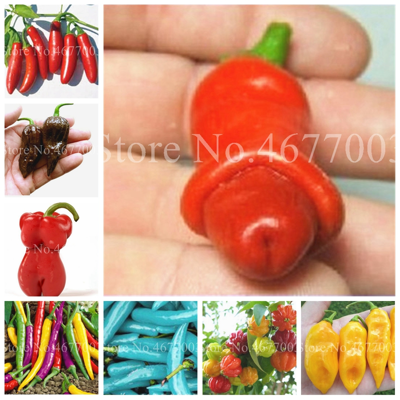 Mix Color Sweet Pepper Bonsai 200 Pcs/ Bag Plant Outdoor Bell Pepper Potted Chill Vegetables Hot Pepper DIY Home Garden Planting