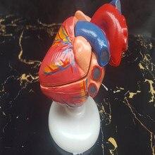 Anatomical Model Medicine Internal Hunman Educational Heart 1:1-Life-Size Vintage