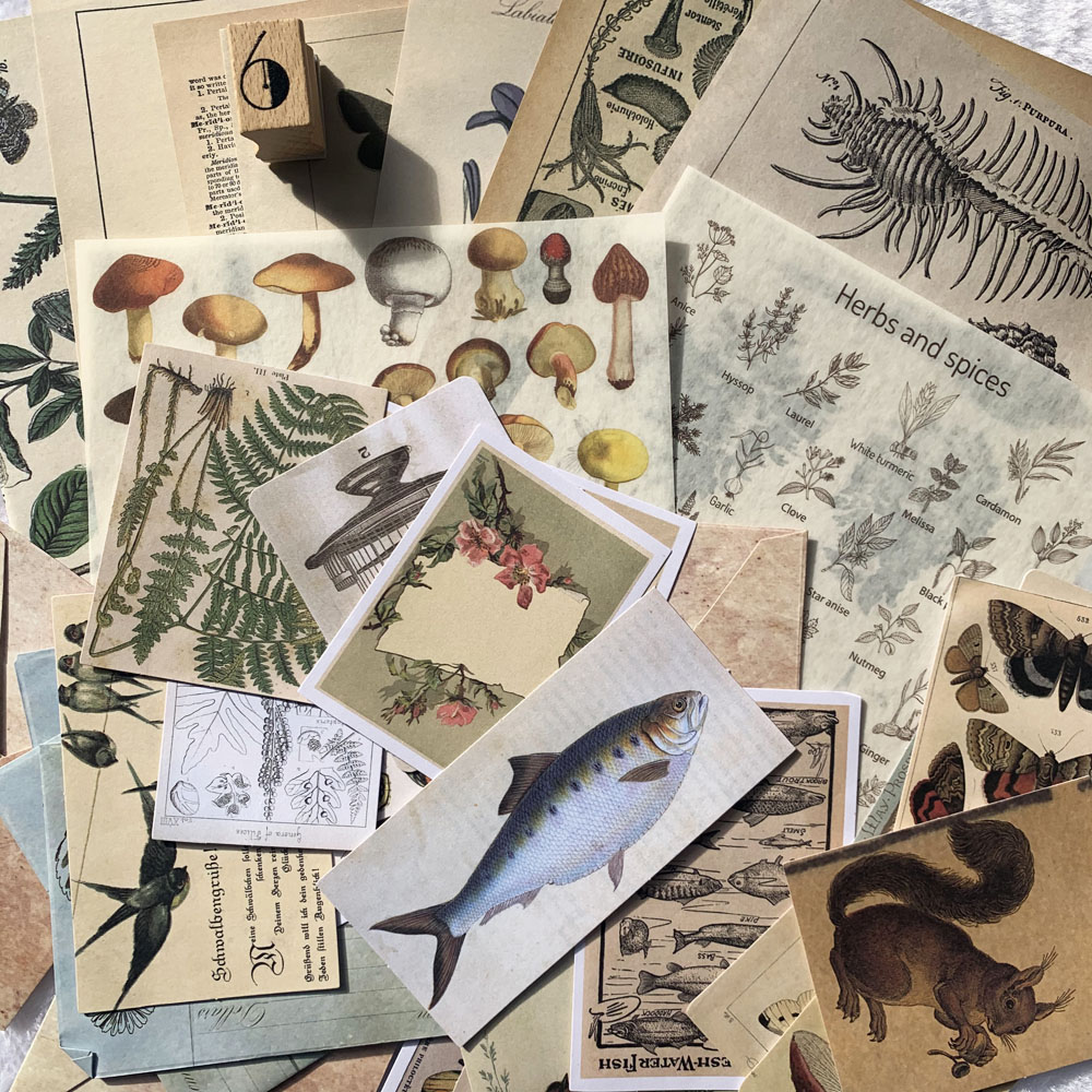 Vintage Natural Notes/Renaissance/A Trip To The Past/Specimen Collection Sticker DIY Scrapbooking Label Diary Retro Sticker