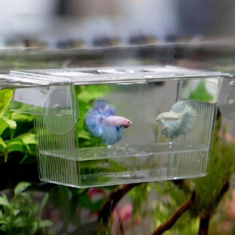 Hatchery of Betta Fish Hatchery Box Acrylic Aquarium Tropical Fish Double Self-Floating Incubator for Viviparous Fish