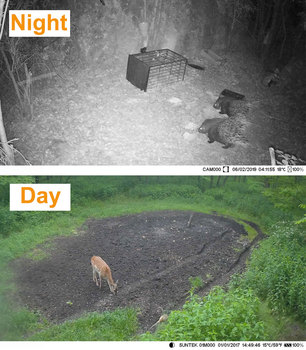 SUNTEKCAM Hunting Camera Trail Camera SMS/MMS/SMTP 2G 20MP 1080P HC810M Photo Traps 0.3s Trigger Time Trap Wildlife 6
