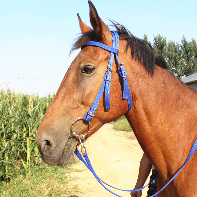 Horse Rope Halter Headcollar Equestrian Equipment Adjustable Horse Riding Bridle Safety Head Collar Horseback Strap Accessories 2