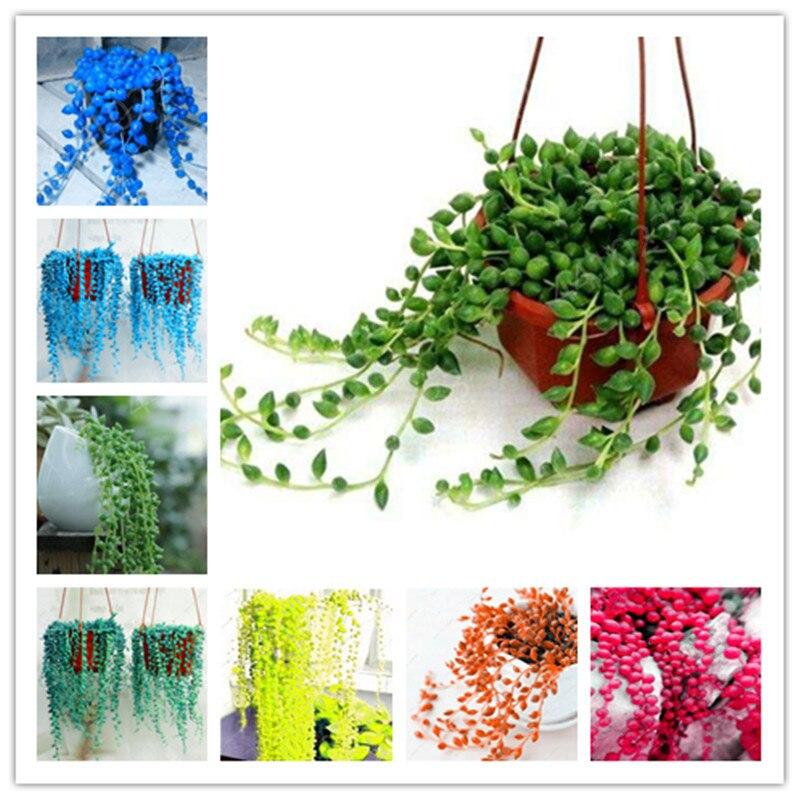 100 Pcs Rare Blue Pearl Chlorophytum Bonsai Office Desktop Flowers Succulents Anti-Radiation Computeren Balcony Edible Sunflower