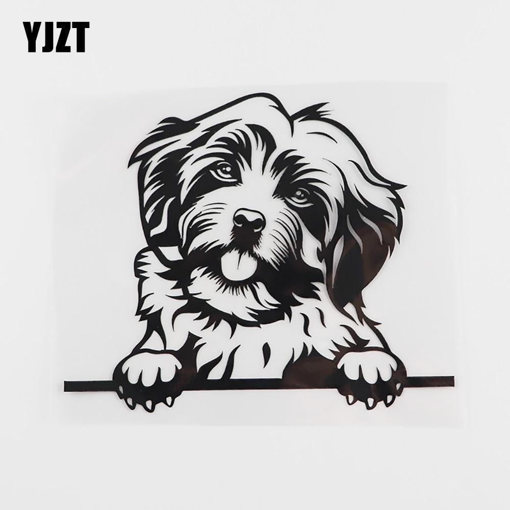 Yjzt 15.1cmx12.4cm engraçado cão havanese peeking decalque vinil etiqueta do carro preto/prata 8a-0107