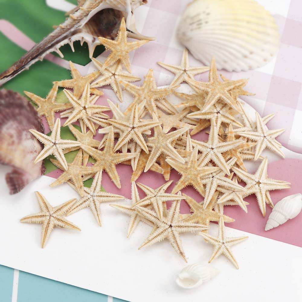 20pc/box 3-5cm Small Starfish Beach Craft Mini Natural Sea Stars Craft Decoration DIY Handmade Accessories