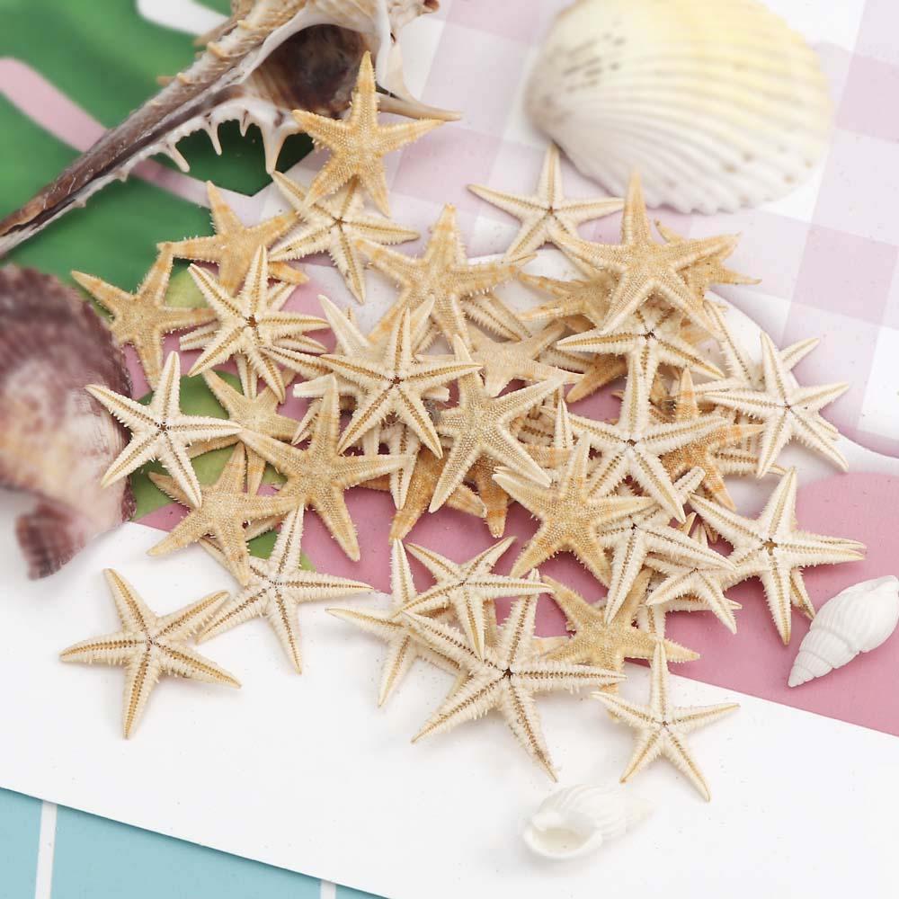20pc/box 3-5cm Small Starfish Beach Craft Mini Natural Sea Stars Craft Decoration DIY Handmade Accessories