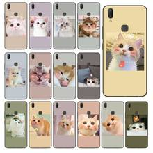Cute Funny Funny Kitten Cat Phone Case Cover For Vivo Y83 Y85 V9 Y95 Y91 Y91i Y97 V5 V5S V7 PLUS V11 V11 Pro V11I Coque Shell(China)