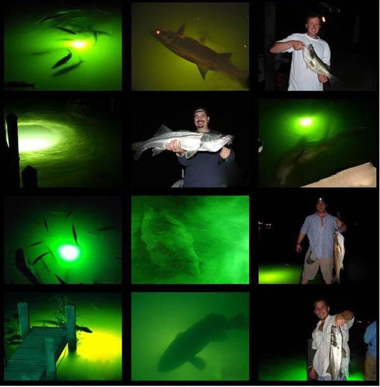 LED fishing lure light