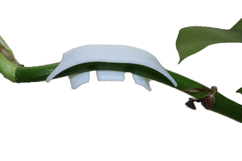 50Pcs Pflanzen Reben Sämlinge Gepfropft Halte Clips Garten Blume Tomaten Clips Obst Zweige Umpflanzen Unterstützung Werkzeug