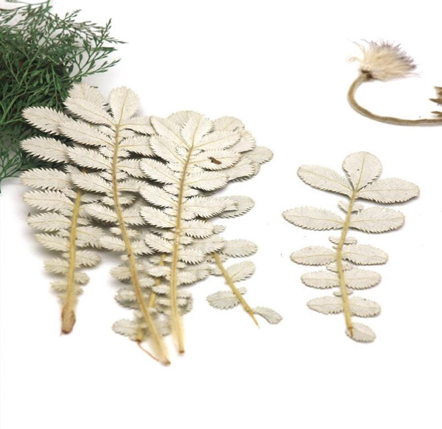120pcs Pressed Dried Potentilla Chinensis Ser Leaf Plants Herbarium For Jewelry iPhone Phone Case Photo Frame Making Accessories 4