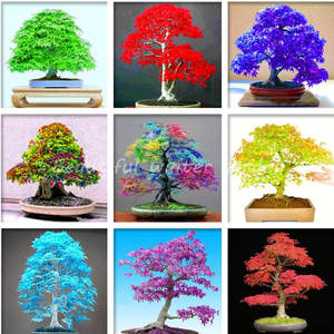 Pot-Suit Bonsai Tree-Plants Garden Japanese Sale Home 50pcs Beautiful for DIY Multicolor