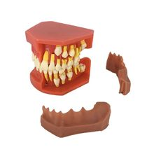 Dental Children Removable Deciduous Teeth Model Permanent Tooth Alternative Display Studying Teaching Tool dental removable dental model dental tooth arrangement practice model with screw teaching simulation model oral materials