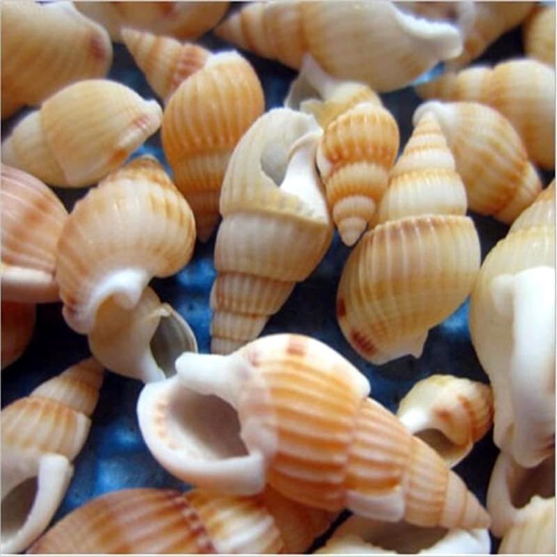 100 Pcs Mini Conch Crafts Natural Seashells Conch Shells Micro-landscape Fish Tank Aquarium Crafts Decoration Home Decor