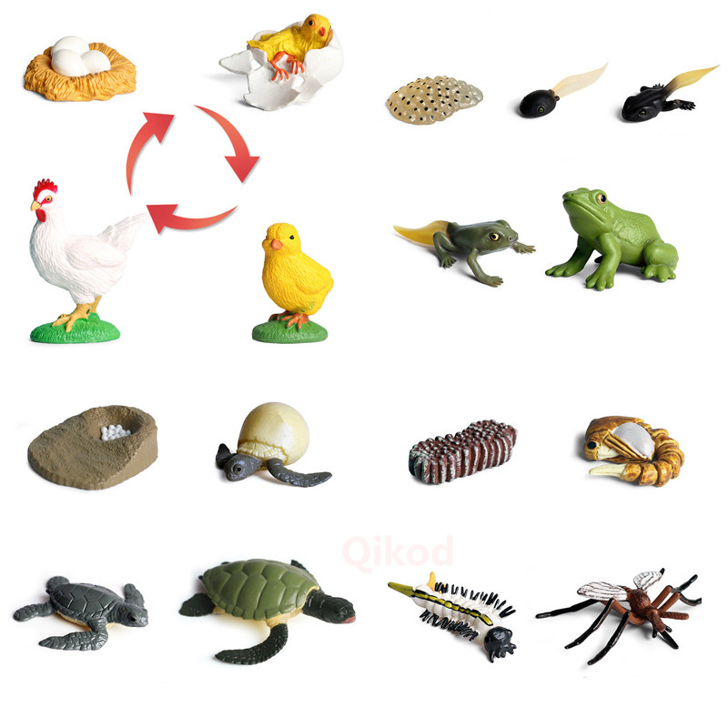 4Pcs Simulation Animal Model Child Mini Animal Rooster Ant Frog Turtle Mosquito Growth Cycle PVC Action Figures Doll Toy For Kid
