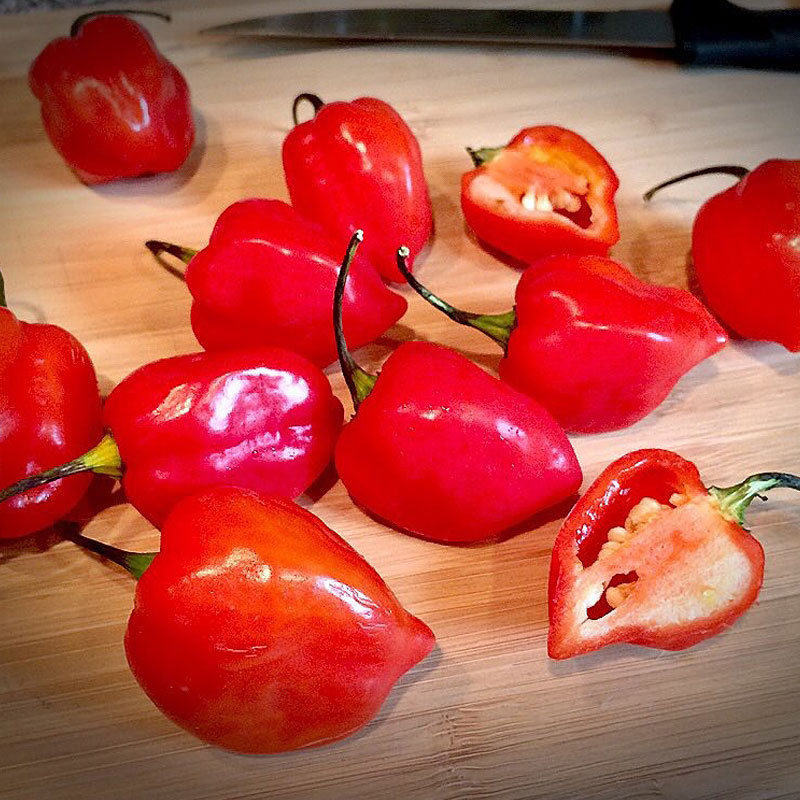 Red Savina Habanero Hot Chili Pepper  100