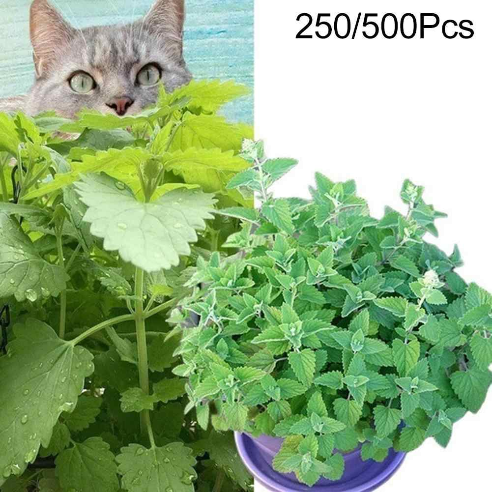 250/500Pcs Nepeta Cataria Seeds Catnip Herb Easy To Plant Catmint Garden Bonsai Decoration