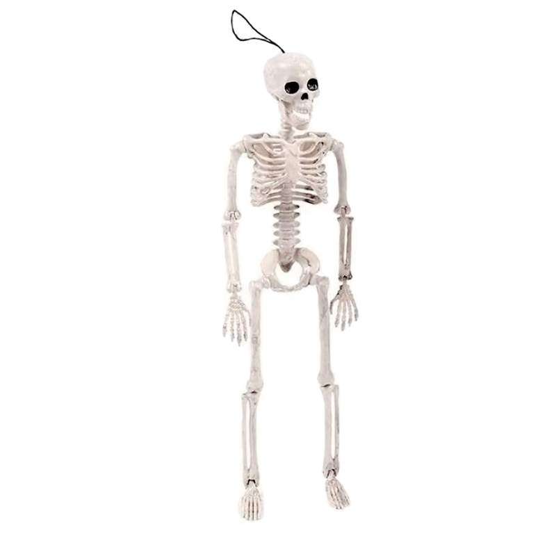 16 Inches Model Or Halloween Skeleton Toys Decoration Posable Skeleton Full Body Halloween Skeleton With Movable Joints Skeleton