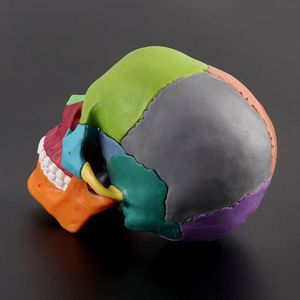 Image 5 - 15 יח\סט 4D מפורק צבע גולגולת אנטומי דגם להסרה הוראה רפואית כלי