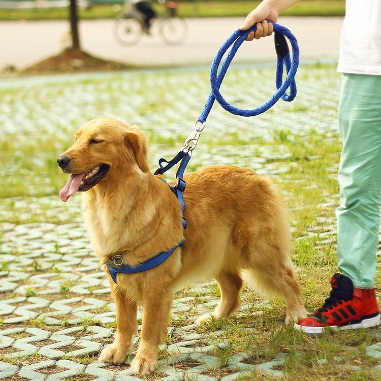 Dog Chain Teddy Golden Retriever Pug A Border Dog Supplies Popular Brand Suppository Small Hand Holding Rope Poodle Puppies Long
