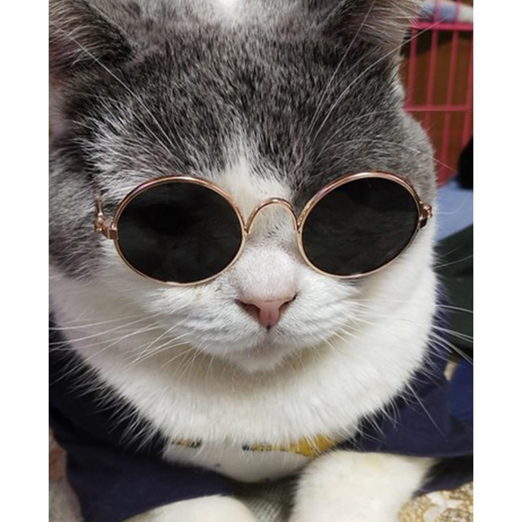 Cute Cool Stylish Stainless Steel Pet Cat Dog Kitty Sunglasses Toy Round Travel, Party, Outdoor