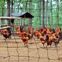 4 м Широкий все размеры птица сетки для садоводства товары кошек для курицы и другой птицы пруд цапля голубь сетки защиты растения, овощи фру...
