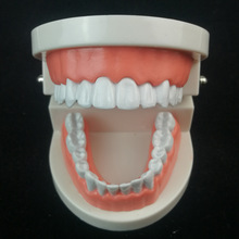 White Teeth Care Mold Adult Teeth Model Standard Dental Teaching Study Typodont Demonstration Too Dental Manekin High Quality dental premature disease teeth model transparent caries pathological demonstration tooth child study teaching showing 2018