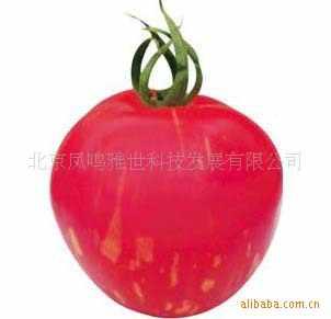 Cai Yu Малый томат бонсай-розовый желтый полоса цвет томатный-100 шт.