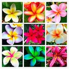 20 шт./пакет разные цвета Frangipani Плюмерия красная Цветок flores, многолетнее растение бонсай растения для дома и садовое насаждение